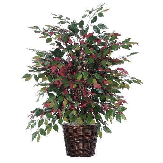 Vickerman Co. Deluxe Artificial Potted Natural Capensia Tree in Basket