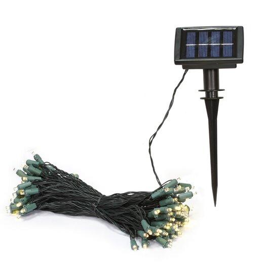 Vickerman Co. 50 Light LED Solar Light Set