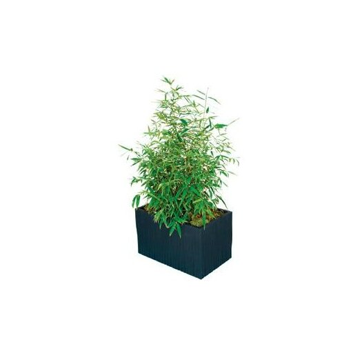 Modern Outdoor Kenji Rectangular Planter Box