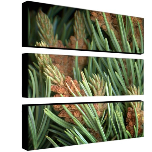 Trademark Global Pinion by Aiana 3 Piece Photographic Print on Canvas Set