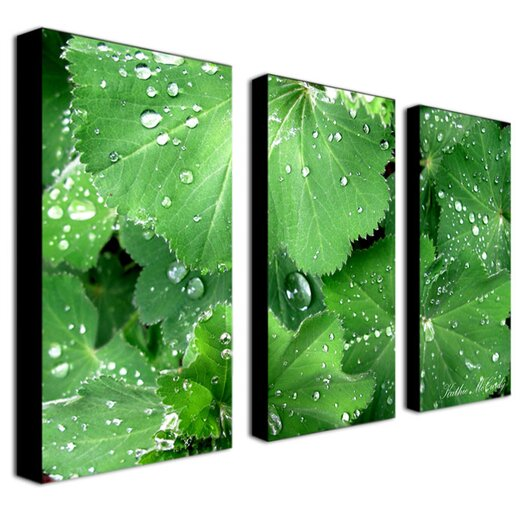 Trademark Global Water Droplets by Kathie McCurdy 3 Piece Photographic Print onCanvas Set