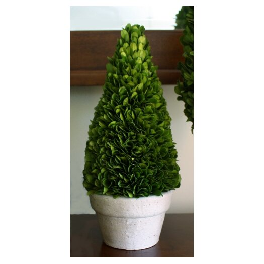 Mills Floral Boxwood Cone Topiary in Pot I