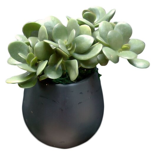 Arcadia Garden Products Round Wall Planter