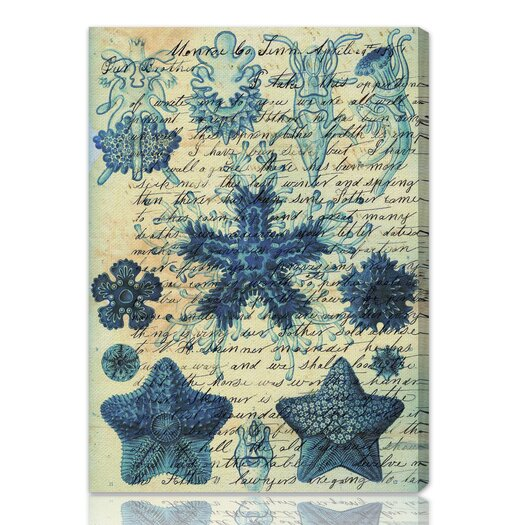 Oliver Gal ''Starfish in Blue'' Graphic Art on Canvas