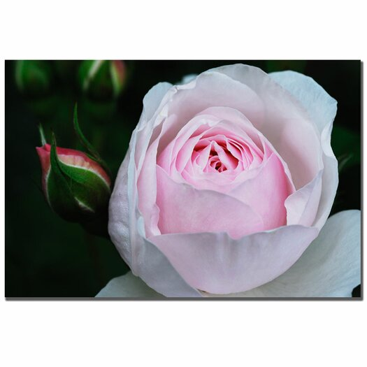 Trademark Fine Art 'Pink Rosebud' by Kurt Shaffer Photographic Print on Canvas