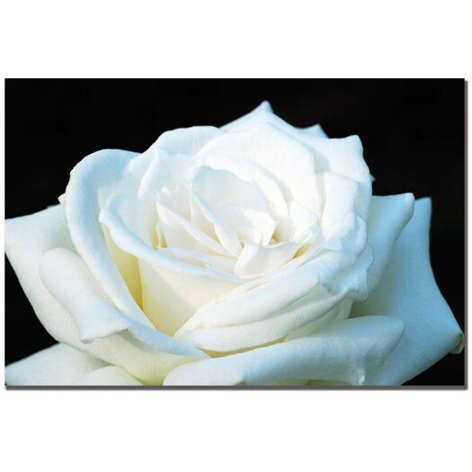 "Trademark Fine Art ""White Rose II"" by Kurt Shaffer Photographic Print on Wrapped Canvas"