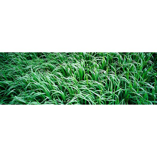 iCanvas Panoramic High Angle View of Grass Montana Photographic Print on Canvas