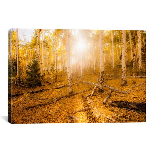 iCanvasArt 'Fall Light' by Dan Ballard Photographic Print on Canvas