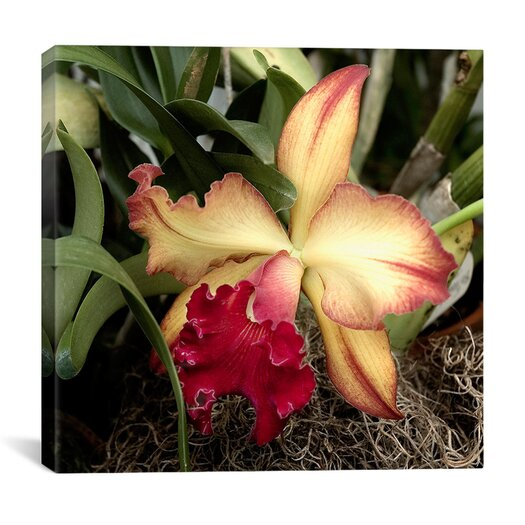 "iCanvas ""Silky Red Orchid - Flowers"" Canvas Wall Art by Harold Silverman"