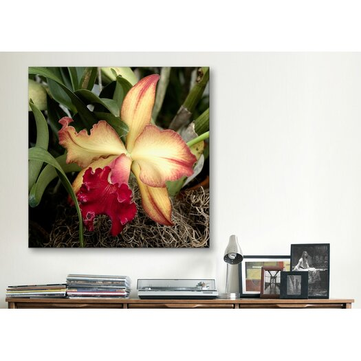 """iCanvas """"Silky Red Orchid - Flowers"""" Canvas Wall Art by Harold Silverman"""