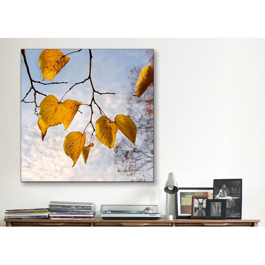 "iCanvas ""Sundown Light"" Canvas Wall Art by Harold Silverman - Foilage and Greenery"