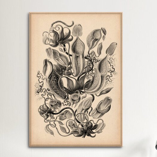 iCanvas 'Nepenthaceae' by Ernest Haeckel Graphic Art on Canvas