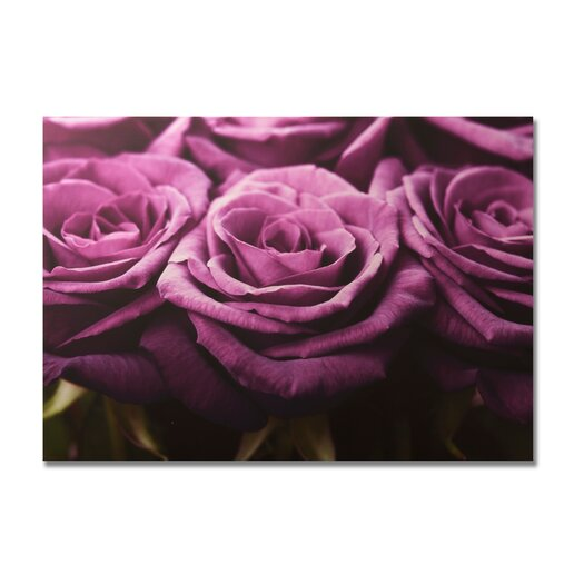 Portfolio Roses Row Photographic Print on Canvas