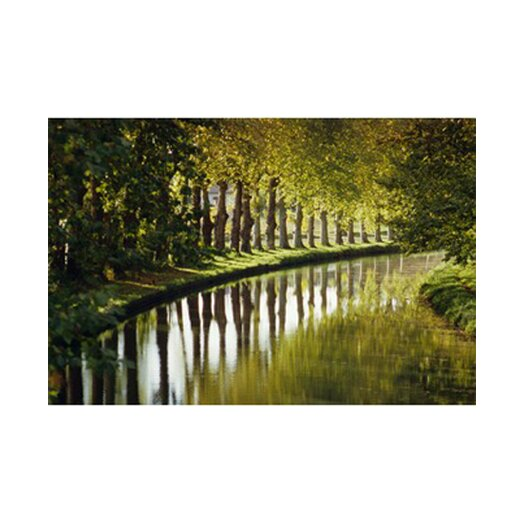 Graham & Brown Graham and Brown Tree Walk Photographic Print on Canvas