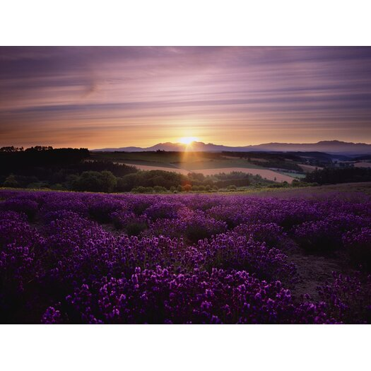 Graham & Brown Graham and Brown Lavendar Sunset Photographic Print on Canvas