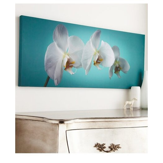 Graham & Brown Graham and Brown Teal Orchid Canvas Photographic Print