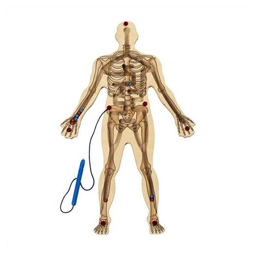 Anatex Magnetic Skeleton Maze