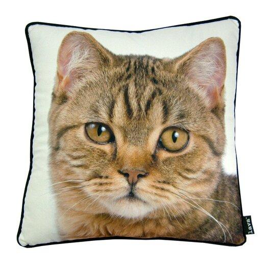 lava British Cat Pillow