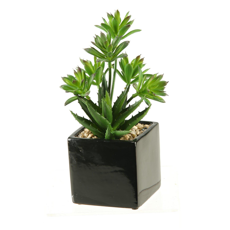 Planter Top View Desk Top Plant in Planter