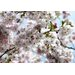 Spring Wall Mural - 368 x 254 cm by Komar