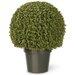 Boxwood Mini Ball Desk Top Plant in Pot