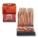 <strong>Bio Signs 9 Piece Teeth Set</strong> by Tedco Toys