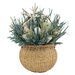 <strong>Urban Florals</strong> Summer Sea Glass Coastal Grass in Round Basket