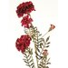 <strong>DIY Flower Artificial Marigold Spray (Set of 6)</strong> by Distinctive Designs