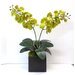 <strong>Phalaenopsis Orchid</strong> by Tree Masters Inc.
