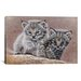 iCanvasArt 'Bobcat Babies' by Pip McFarry Graphic Art on Canvas