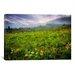 iCanvasArt 'Colorado Flowers' by Dan Ballard Photographic Print on Canvas