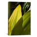 <strong>iCanvasArt</strong> 'Leaves of Green' by Harold Silverman - Foilage and Greenery Photographic Print on Canvas