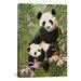 iCanvasArt 'Panda Paradise' by William Vanderdasson Painting Print on Canvas