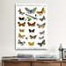 <strong>iCanvasArt</strong> Animal European Butterflies Graphic Art on Canvas