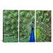 <strong>Photography Peacock Feathers 3 Piece on Canvas Set</strong> by iCanvasArt