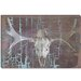 Moose Skull #6 Canvas Wall Art