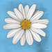 "<strong>Maxwell Dickson</strong> ""White Daisy"" Graphic Art on Canvas"
