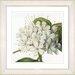 Studio Works Modern Vintage Botanical No. 47W by Zhee Singer Framed Giclee Print Fine Wall Art