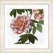 Studio Works Modern Vintage Botanical No. 49W by Zhee Singer Framed Giclee Print Fine Wall Art