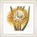 <strong>Vintage Botanical No. 15W by Zhee Singer Framed Giclee Print Fine W...</strong> by Studio Works Modern