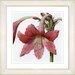 Studio Works Modern Vintage Botanical No. 01W by Zhee Singer Framed Giclee Print Fine Wall Art
