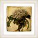 <strong>Vintage Botanical No. 37A  by Zhee Singer Framed Giclee Print Fine ...</strong> by Studio Works Modern