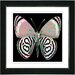 "Studio Works Modern ""Zebra Butterfly"" by Zhee Singer Framed Graphic Art"