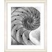 """Studio Works Modern """"Cambrian Sea Shell"""" by Zhee Singer Framed Graphic Art"""