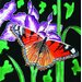 "8"" x 8"" Purple Iris with Big Butterfly Art Tile"