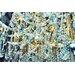 Fluorescent Palace 'Diamond Dust' Photographic Print on Canvas