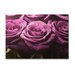 <strong>Portfolio Roses Row Photographic Print on Canvas</strong> by Graham & Brown