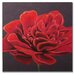 "Handpainted Red Poppy Printed Canvas Art - 24"" X 24"""