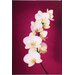 <strong>Graham & Brown</strong> Graham and Brown Fucshia Orchid Lacquer Photographic Print