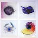 <strong>X-ray Designs 4 Piece Nautical Frosted Glass Coasters Set</strong> by Radiant Art Studios